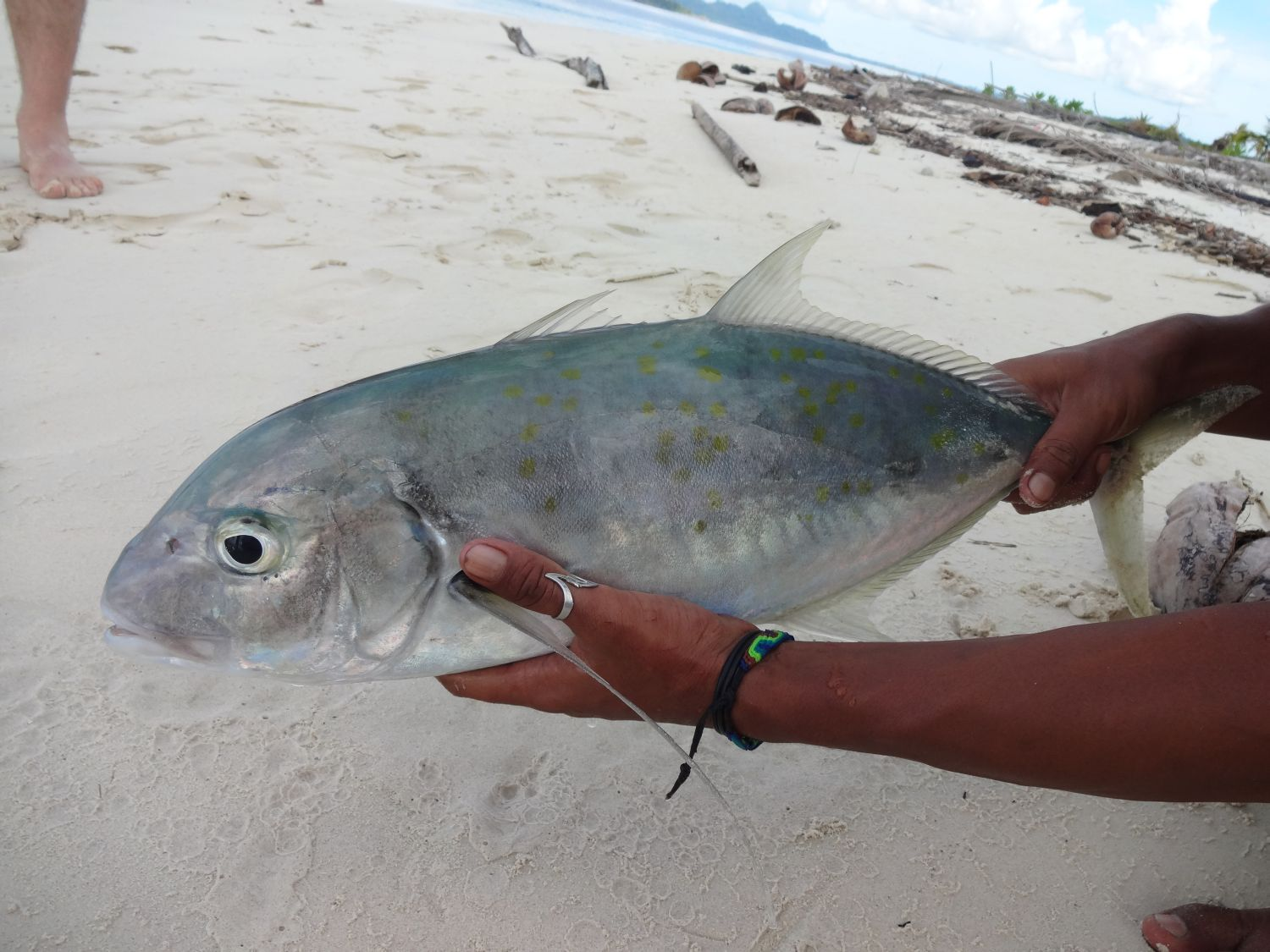 giant trevally just caught